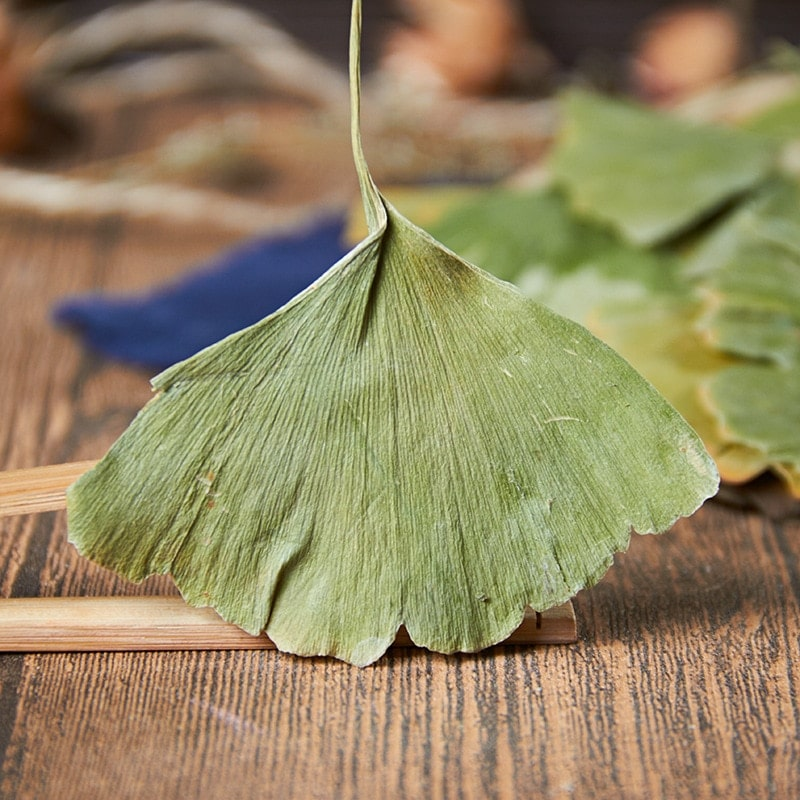 Té chino de Ginkgo, hojas verdes de hierbas naturales secas, decoración de boda, regalo