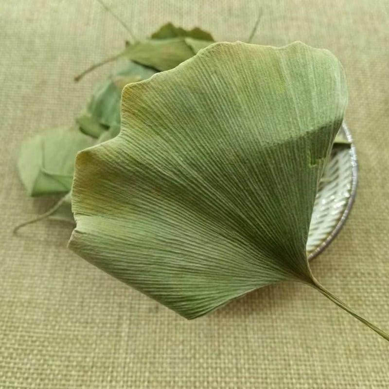 Té de hojas de Ginkgo Biloba
