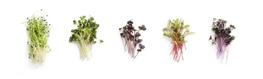 Qué se puede germinar